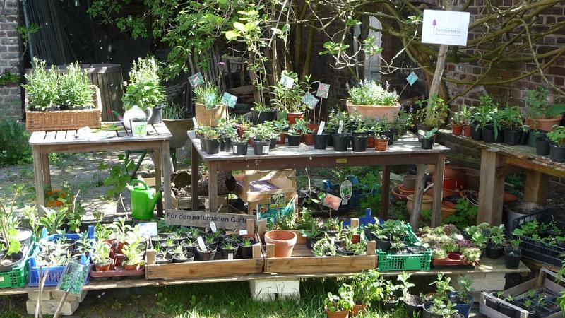 Pflanzenbörse.jpg